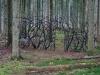 Portes des forêts