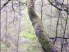Sur le fil, Sapin, 70 cm